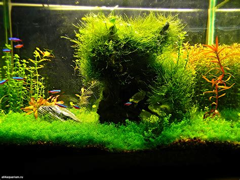 aquarium design competition results of the 1st stage of the scaper s tank contest 2014