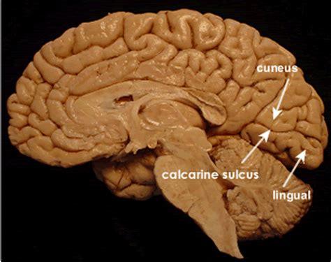 brain topography at chulalongkorn university studyblue