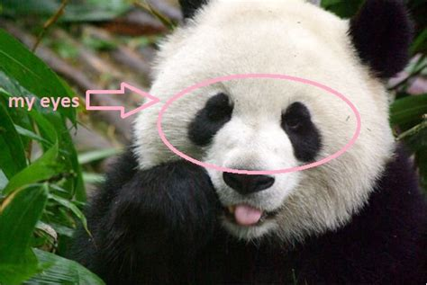 Lu Tidur Panda starring me january 2012