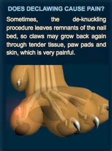 pros and cons of cats what is quot declawing quot dr kind klaws