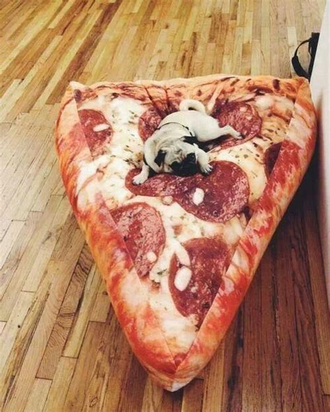 couch pizza pizza couch for the dog apartment house pinterest