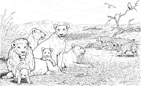 african lion coloring pages free lion coloring pages