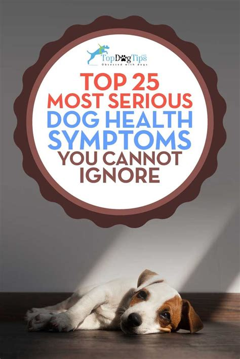 sick puppy symptoms 25 best ideas about sick on pet health project and websites