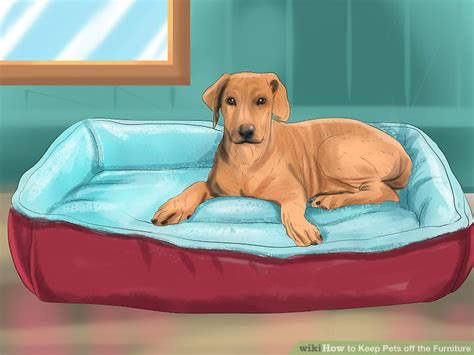 how to stop dog going on sofa keep dogs off sofa how to keep your pets off the furniture