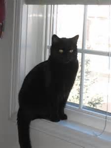 file black cat on window jpg wikimedia commons
