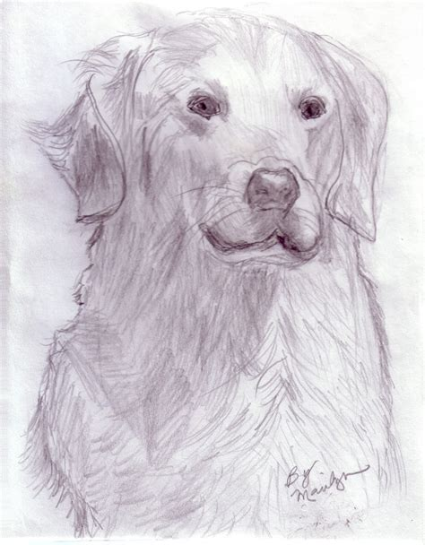 Animal Pencil pencil drawing of animals www pixshark images