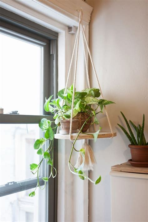 Window Plant Hanger - 25 best ideas about indoor hanging plants on