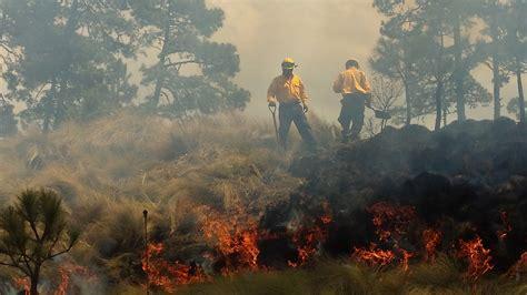 listado de beneficiados por la conafor 2016 descartan afectaciones a arbolado adulto por incendios en