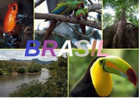 imagenes de animales y plantas de brasil lista los pa 237 ses mas megadiversos del mundo