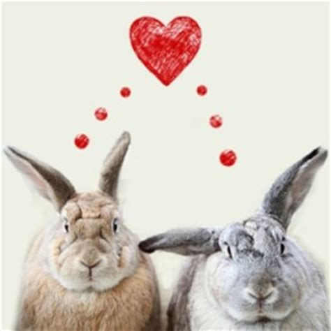 valentines day rabbit show a bunny some this s day my house rabbit
