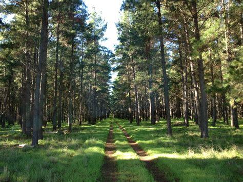 Lu Taman Sinar Matahari gambar pemandangan pohon alam jalan gurun cabang