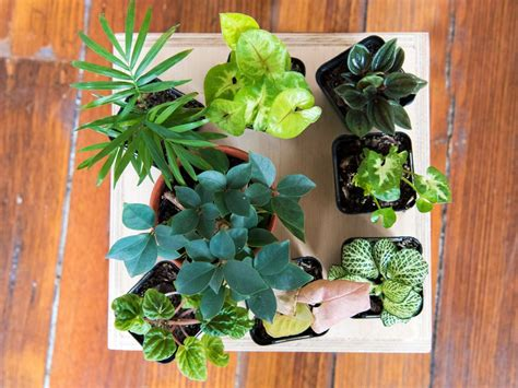 Make Plant - how to make a terrarium realestate au