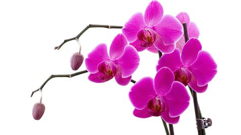 free floral images orchids wallpapers best wallpapers