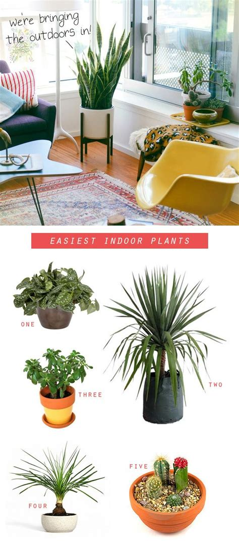 easy to take care of indoor plants pin by christine moore on green thumb pinterest