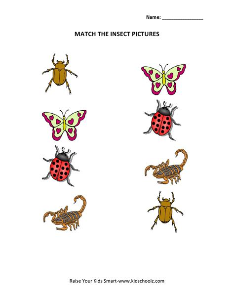 insects for kindergarten insect worksheets for kinder insectspring preschool