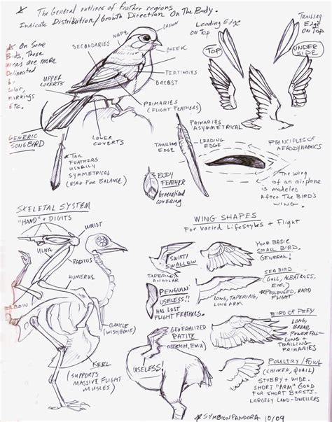 tutorial drawing sketchbook bird wings tutorial sketch by eva st clare on deviantart