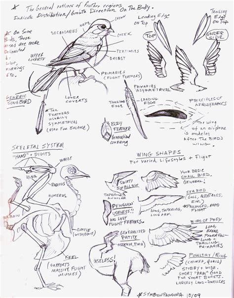 tutorial scribble sketchbook bird wings tutorial sketch by eva st clare on deviantart