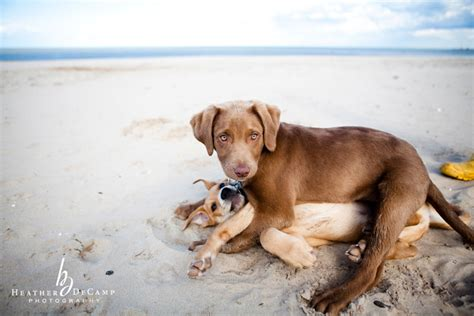 puppy photography montrose chicago photography dec chicago wedding photographer