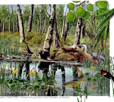 eek! critter habitats wisconsin's wetlands