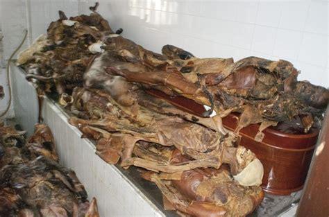 imagenes fuertes de cadaveres en descomposicion los cad 225 veres de la universidad complutense de madrid lor