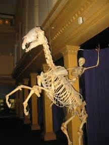 As the best part of the australian museum a human skeleton riding