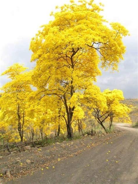 imagenes de paisajes naturales venezuela fotograf 237 as de paisajes hermosos de venezuela im 225 genes