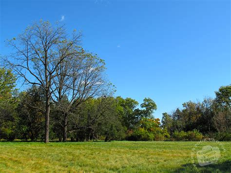 Landscape Pictures Of Trees Free Bare Trees Photo Fall Foliage Picture Autumn