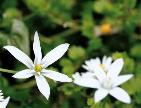 fiori di bach of bethlehem onore al dott bach benesserecorpomente it