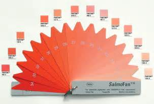 farm raised salmon color edward tufte forum what color is your salmon flamingo