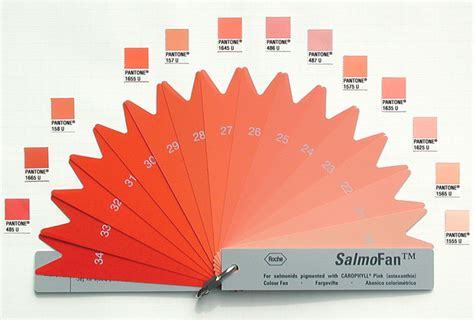 the color salmon edward tufte forum what color is your salmon flamingo