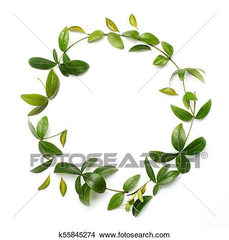 circle frame   green branches  leaves