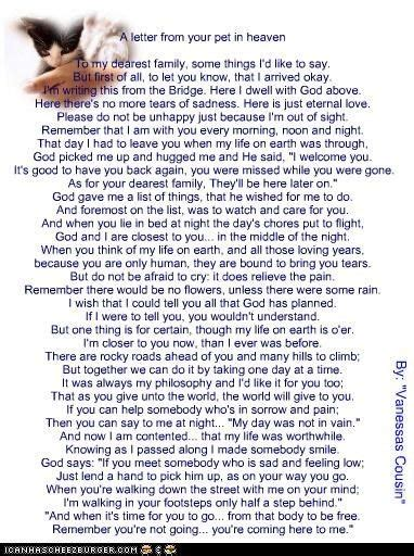 pets in heaven gift for owners a letter from your pet in heaven pets heavens rainbow bridge and bridge