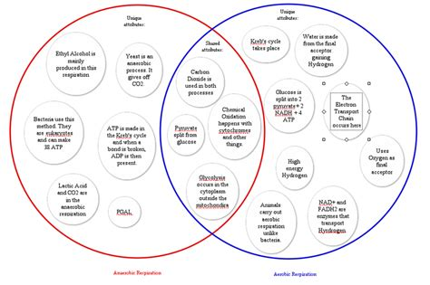 venn diagram cellular respiration and photosynthesis cellular respiration and photosynthesis venn diagram