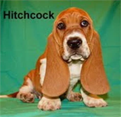 basset hound puppies for sale in wv basset hound breeders