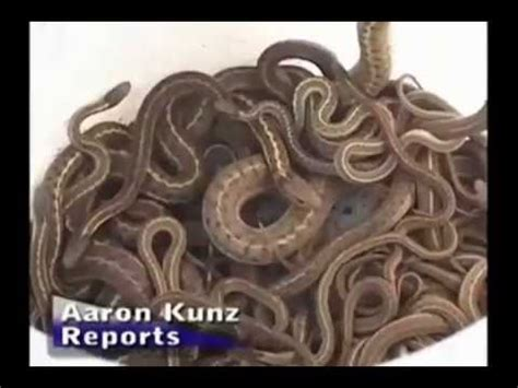 house infested with snakes snakes infest idaho house youtube