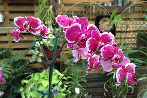 Imagenes De Jardines Con Orquideas | jardines con orquideas y bromelias