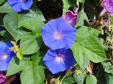 nomi piante da giardino piante da esterno piante da giardino piante per l esterno