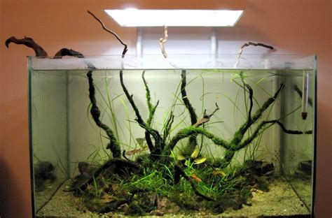 biotope aquascape 106 best images about biotypes from around the world on