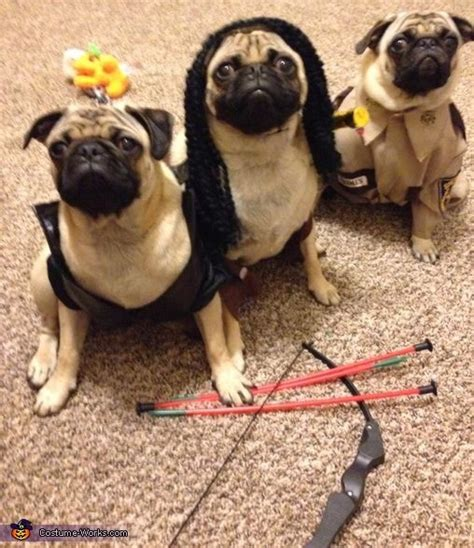 frank the pug costume 25 best ideas about pug costumes on pugs in costume pugs and
