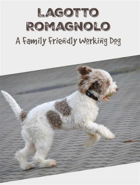 family friendly dogs lagotto romagnolo family friendly hypoallergenic