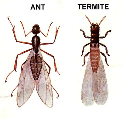 8 Ways To Deal With Pests by Flying Termites In Bathroom How To Kill Flying Ants And