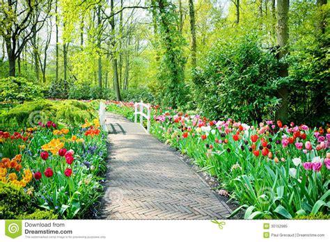 imagenes de jardines maravillosos tulipanes multicolores en los jardines de keukenhof imagen
