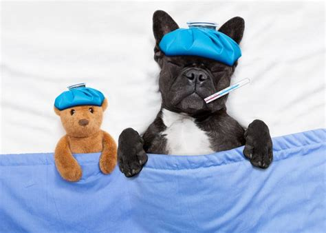 puppy flu 9 things you need to to protect your pets from the flu outbreak cuteness