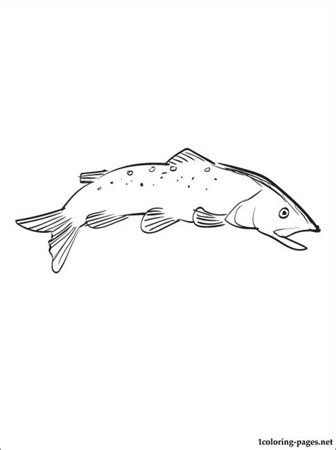 free coloring pages of the trout