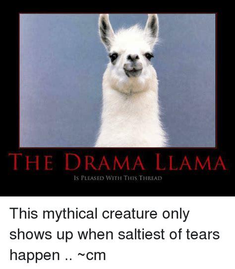 Drama Llama Meme - 25 best memes about drama llama drama llama memes