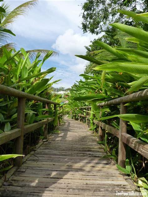 Caguas Botanical Garden Zeepuertorico Caguas Botanical Garden