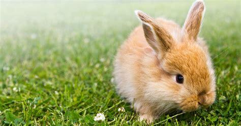 minicuentos de conejos y roedores y conejos c 243 mo elegir a su mejor amigo blog