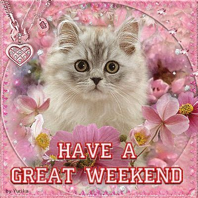 animated a great weekend a great weekend cat kitten my creations on