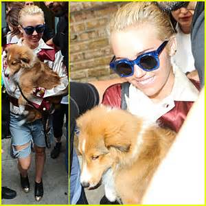 miley cyrus puppy emu puts a smile on her face miley