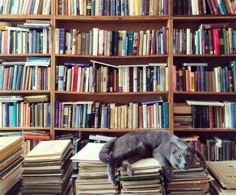 libros web html imagenes cinco libros sobre gatos a los que no me pude resistir